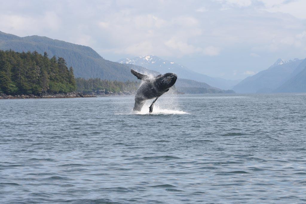 Sitka Sound Whale Tours