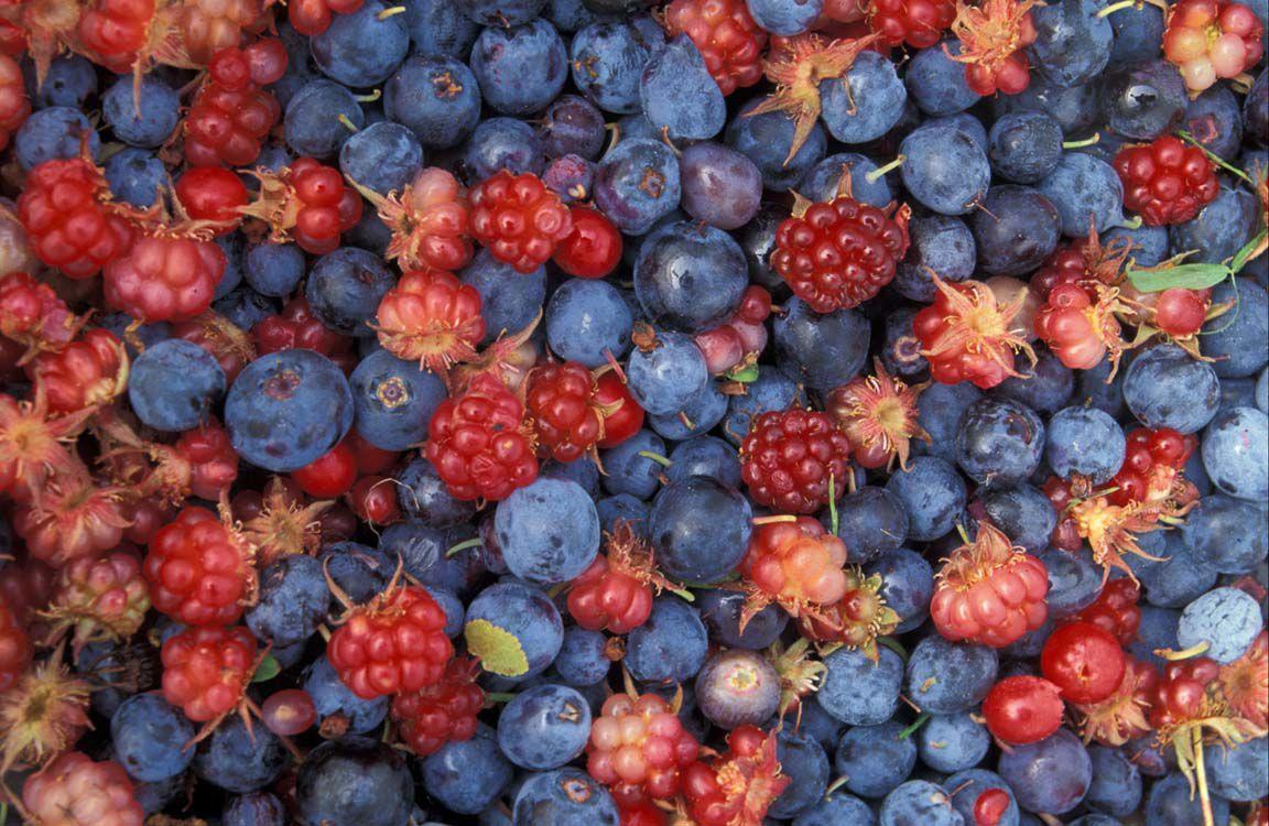 wild berries in sitka alaska